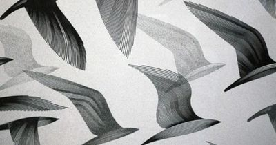 birds, illustration by Kai and Sunny Creative Review - Kai and Sunny Return To The Wild // poojasaxena