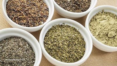 Learn how to dry herbs for long-term storage and health self-reliance