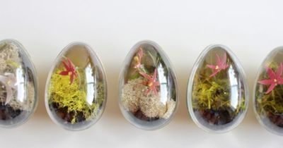 The House That Lars Built: How to make Easter egg terrariums.