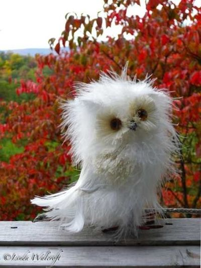 Disheveled Owl. Love him!