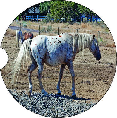 2 Absorbent Car Coasters of Horses #2. Car Accessories for her, Auto Coaster, Coaster, Cup Holder Coaster, Gift For Her, For Him $14.00