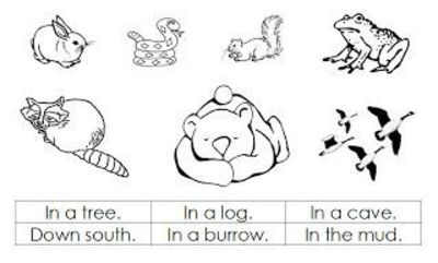 Printable Pictures of Hibernating Animals   Amy also had a ...