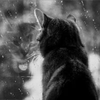 rain and cats. two of my favorite things. it's good to know that in this picture that the cat is sheltered...he is standing at a window
