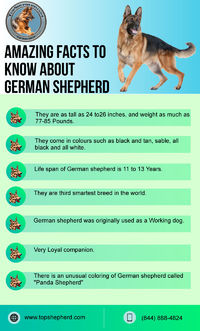 Check out here Amazing facts to know about German shepherd. or if you want to buy German shepherd puppies or dog then contact best German shepherd breeder in California. Visit us now https://topshepherd.com/
