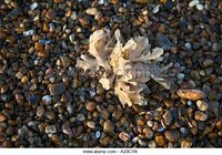 Image result for seaweed suffolk