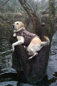 Definitely makes me miss our duke dog, couldn't have asked for a better hunting partner!