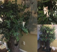 2020's Best Cat Furniture