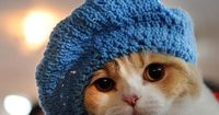 What started as a lark has turned into steady work for Sara Thomas, author of 'Cats in Hats: 30 Knit and Crochet Patterns for Your Kitty.'