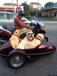 If this isn't a dog lover's dream come true, we don't know what is. These three happy pups (Lancelot, Cedric and Ivanhoe) were riding sidecar in retired plastic