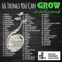 Bet you didn't know you could grow all these different plants in containers! Give it a try. You might just be surprised!