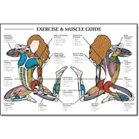 When I get a house someday, for the workout room. =) Exercise and Muscle Guide, Female $19.77