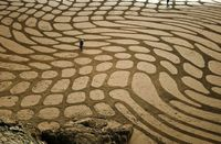 "Bay Area landscape artist Andreas Amador employs San Francisco's beaches as a canvas for his artistic vision�€""creating and photographing large-scale organic desi"
