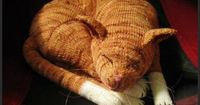 Jingga the Orange Tabby Cat--I know a certain 13 yr old who will think this is really cool :)