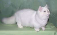 .Beautiful White Cat!