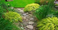 Backyard dry streambed of river rocks - just gave me an idea for a corner of the yard where plants just do not grow.