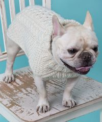 Cabled Dog Sweater Knitting Pattern #knit #redheartyarns