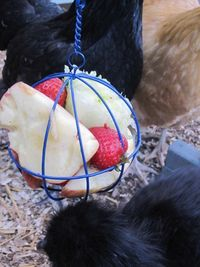I got one of these for my chickens.