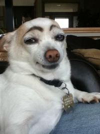 Bored? Draw eyebrows on your dog and laugh until his next bath.. hahahha