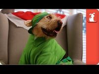 "Mariah Carey �€"" All I Want For Christmas Is You (Dog Parody)"