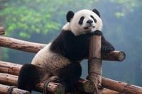Google Panda is Helping Small Businesses Optimize Search