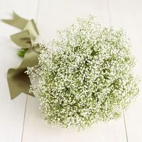 Baby's Breath: Revamped » WedLoft