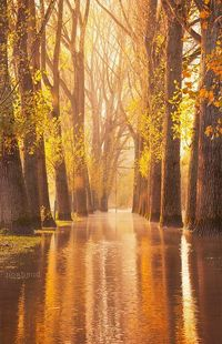 Waltzing Woods - Cologne, Germany