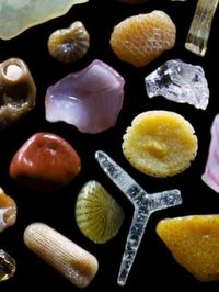 Microscopic beach sand. Next beach trip I'm packing my microscope. Be out on the beach with all the cool kids lookin at my microscope, teehee.