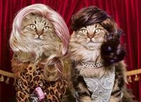 If Fin and Sally were cats going to their Christmas PARTAYS