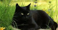 Black cat Shnufel -- pretty with the black and the colors...