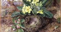Primroses and bird's nest