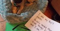 Fair point.   23 Photos That Prove Pug Shaming Is The Best Kind Of Dog Shaming