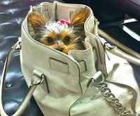 yorkie in a bag