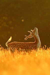 There's nothing as majestic as animals under the golden glow of the first and last hours of sunlight.