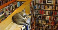 There are a few places where you can always count on finding a cat, like inside a ...