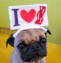 pug pics funny | Funny animals of the month (30 pictures) ~ Animal Space