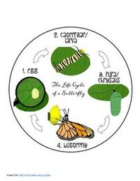 Printables for The Life Cycle of a Butterfly