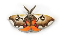 "28.5"" x 16.5"" Giant moth sculpture, painted tiger moth, Sustainable design, nature art $110.00"