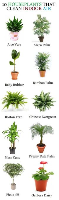 house plants, indoor house plants and boston ferns.