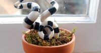 Halloween poisonous plant (image only), I figure I can make this out of white FIMO sculpting clay then paint the black stripes.