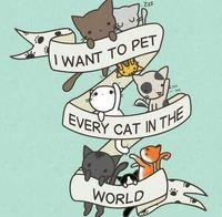 pets, cats and crazy cat lady.