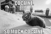 OMG!!! THIS WOULD SOOOO BE MY CATS!!