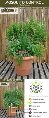 Plants for mosquito control