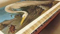 John James Audubon's Birds of America Each print is also available as a free high-resolution download.