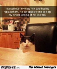 My cat is pissed at me humor