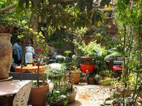 The Ruined Garden, Fes