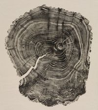 The artist Bryan Nash Gill makes relief prints of tree-trunk cross sections, harvested cedar telephone poles and discarded fence posts in his native Connecticut