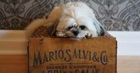 Pets will sleep sweetly on this vintage crate bed you can make at home I've been on a DIY kinda kick lately. Usually, I bake a batch of dog treats and...