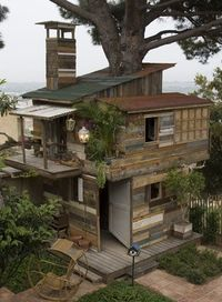 Coolest tree house!