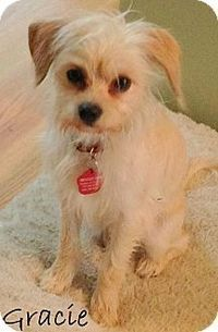 New Jersey, NJ - Maltese/Terrier (Unknown Type, Small) Mix. Meet Columbus NJ - Gracie, a dog for adoption. http://www.adoptapet.com/pet/12318015-new-jersey-new-jersey-maltese-mix