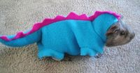 Guinea pig in a dinosaur costume! Say it with me: AWWWWW!!